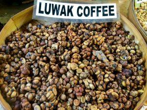 kopi-luwak-excrements-civettes